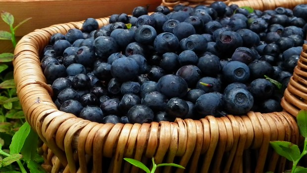 how-to-treat-eye-floaters-try-bilberry-remedy